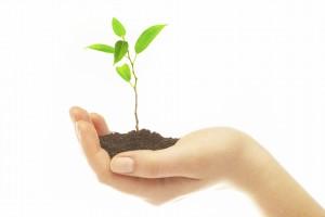 Eine Hand hält eine junge Pflanze